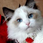 Profile picture of Obella
