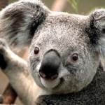 Profile picture of ape224