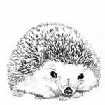 Profile picture of pulchritude